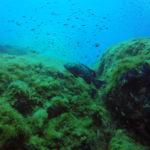 Mérou Port-Cros